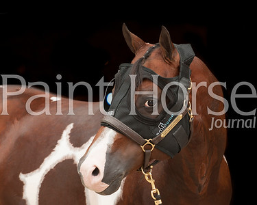 2015 Equilume Paint